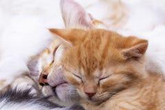 Pet animal; cute kitten baby cat indoor.  stock images