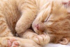 Pet animal; cute kitten baby cat indoor.  stock photo