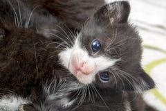 Pet animal; cute kitten cat. Newborn baby cat. House cat.  stock photography