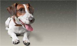Pet. Animal first dog care cure health Royalty Free Stock Photography