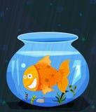 Pet animal Fish in water pot aquarium Stock Photo