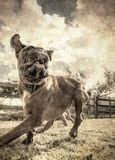 pet animals, dogs Stock Images