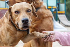 pet animals, dogs Royalty Free Stock Photography