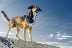 Pet animals, dogs Royalty Free Stock Images