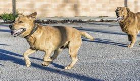 pet animals, dogs Royalty Free Stock Photos