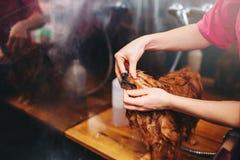 Pet as mãos do groomer, trabalhando com cão pequeno fotografia de stock royalty free