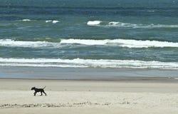 Pet at at the beach in Denmark Stock Photos