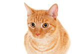 Pet beautiful cat portrait Royalty Free Stock Photo