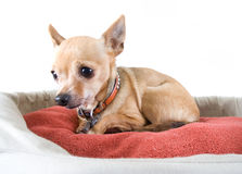 Pet bed Stock Photos