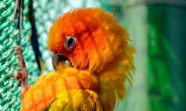 Pet Bird Stock Photos
