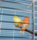 Pet Birds Stock Photos