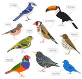 Pet birds collection,  breeds icon set flat style isolated on wh Royalty Free Stock Photo