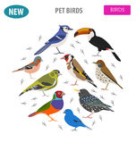 Pet birds collection,  breeds icon set flat style isolated on wh Royalty Free Stock Photography