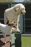 Pet Boarding Stock Image