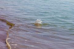 PET bottle in water. In the park in nature royalty free stock photos