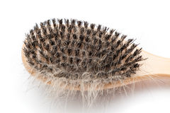 Pet brush with clump of dog hair Stock Images