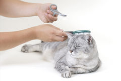 Pet care Royalty Free Stock Photo