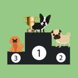 Pet care design Stock Images