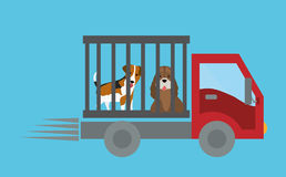Pet care design Stock Photo