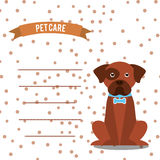 Pet care Royalty Free Stock Images