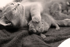 Pet care Royalty Free Stock Photography
