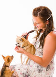 Pet caring Stock Images