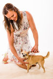 Pet caring Royalty Free Stock Images