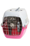 Pet carrier with cat. Isolated on white background Stock Photo
