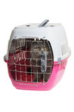 Pet carrier with cat Stock Photo