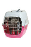 Pet carrier with cat Royalty Free Stock Photography