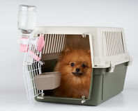 Pet carrier with dog inside. Pet carrier with feeding and watering supply for red Pomeranian spitz ready for long range transportation Stock Images