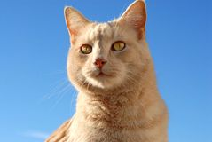 Pet Cat. This is a picture of my sisters pet cat, Simon Stock Image