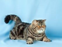 Pet cat Royalty Free Stock Photos