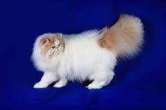 Pet cat Stock Photo