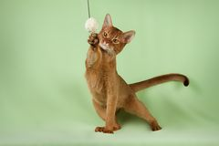 Pet cat Stock Photography