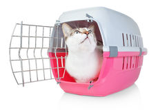Pet cat in a cage for transport with door open. He looks up Royalty Free Stock Photography
