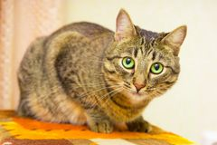 Pet cat. Stock Photos