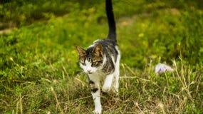 Pet cat. Stock Image