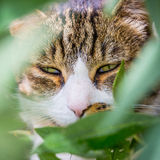 Pet cat. Closeup face and squinted eyes Royalty Free Stock Photos