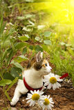 Pet  cat flowers chamomiles Royalty Free Stock Photo