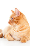 Pet cat portrait of a beautiful redhead Royalty Free Stock Photo