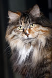 Pet cat's portrait close-up Stock Photo