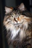 Pet cat's portrait close-up stock photo
