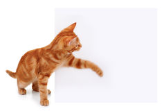 Pet Cat Sign. Pet cat swatting at sign. Motion blur on paw to show movement Royalty Free Stock Photos