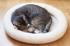 Pet Cat Sleeping In Cat Bed Curled Up In A Ball Stock Images