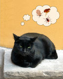 Pet cat summer health risk - tick insects, flea. Royalty Free Stock Photography