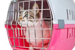 Pet cat trapped in a cage. Royalty Free Stock Images