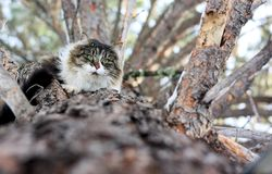Pet Cat Up a Tree Royalty Free Stock Images