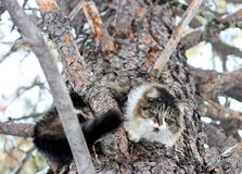 Pet Cat Up a Tree Stock Photography