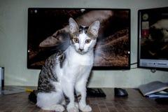 Pet Royalty Free Stock Photos